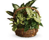 Fresh Live Floral Green Basket